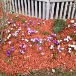 Horace's side garden 2013